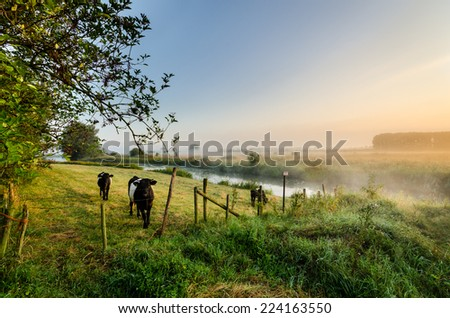 countryside europe at sunrise with grazing cows in the foreground - stock photo