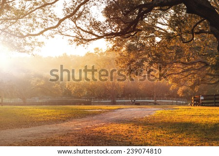 Countryside farm or ranch with dirt road and overhanging live oak branches and distant fields at sunrise or sunset and sun rays beaming across - stock photo