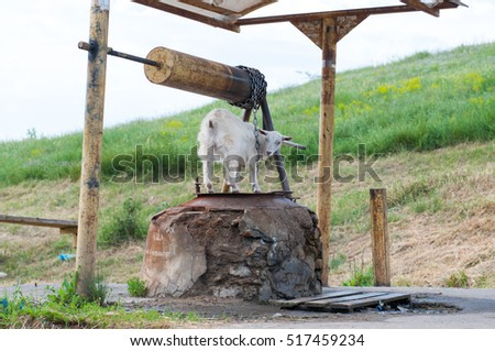 Countryside. Goat near the well.