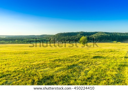 Countryside landscape. Lonely tree on the meadow