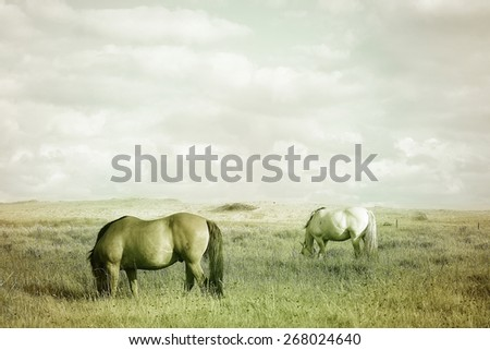 Countryside landscape with grazing horses on pasture under cloudy sky. Soft warm colors vintage effect photography. - stock photo
