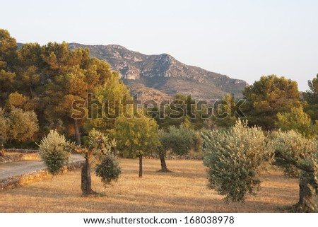 Countryside landscape with mountains, olive and almond trees - stock photo