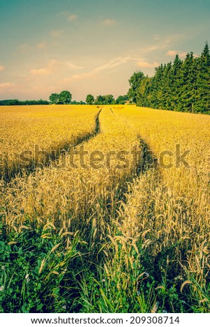 Countryside landscape with tracks in the crops