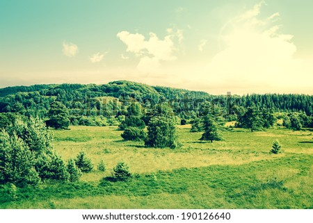 Countryside landscape with trees on a field - stock photo