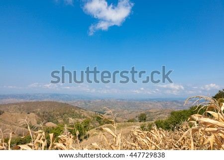 Countryside of Thailand; Rural daylight landscape. Beauty farm and a Heart cloud, blue sky, corn, trees, green field Asia. - stock photo