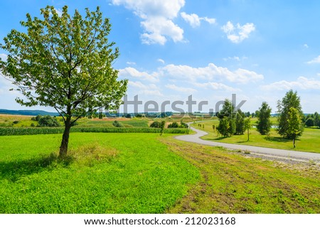 Countryside road along green fields in Paczultowice village near Krakow on sunny summer day, Poland