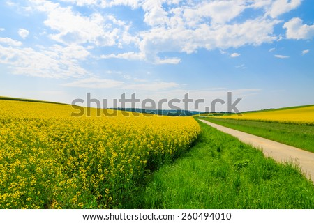 Countryside road along yellow rapeseed flower field and blue sky, Burgenland, southern Austria - stock photo