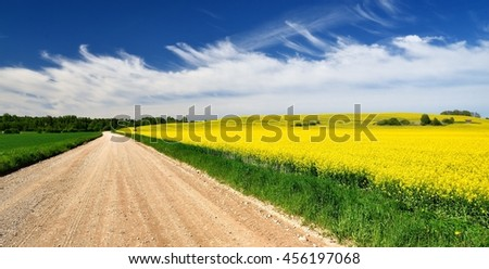 Countryside road and yellow rapeseed field in Latvia