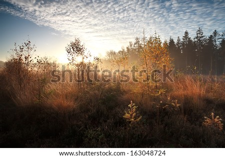 countryside road through marshes in morning sunlight, Fochteloerveen, Netherlands - stock photo
