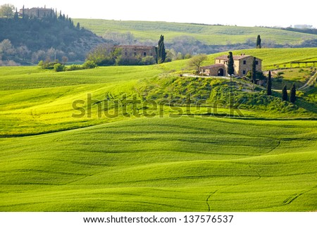 Countryside, San Quirico ���´Orcia , Tuscany, Italy