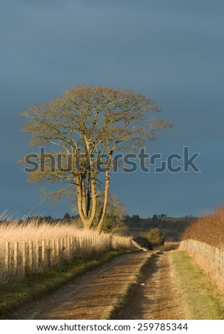 Countryside track with late afternoon sun and heavy cloud behind. - stock photo