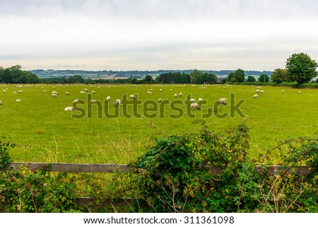 Countryside with sheep - stock photo