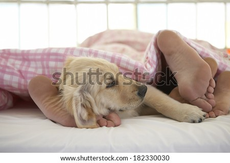 couple and dog on bed at morning - stock photo