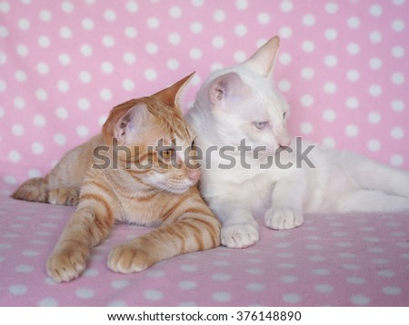 Couple cats love together on pink background for Valentine theme by pink vintage tone for picture - stock photo