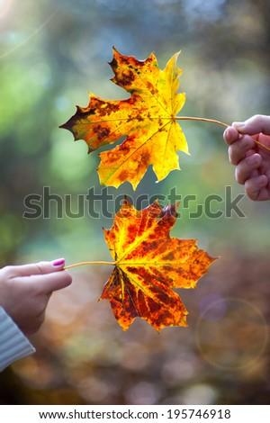 couple holding autumn leaves - stock photo