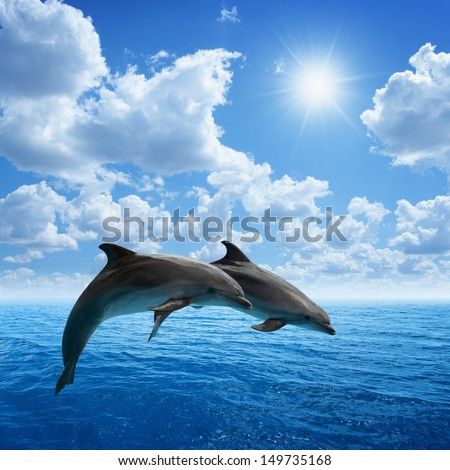 Couple jumping dolphins, blue sea and sky, white clouds, bright sun - stock photo