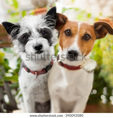 couple of  dogs at the park relaxing  on summer vacation holidays, embracing and hugging each other in love , close together - stock photo
