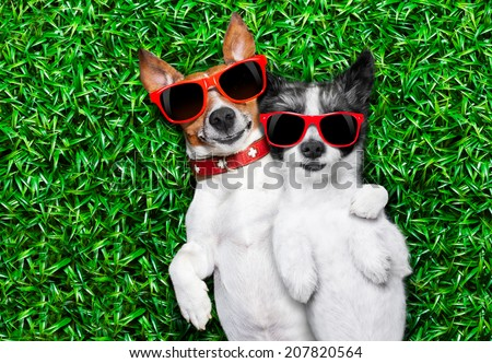 couple of dogs in love very close together lying on grass in the park with sunglasses chilling out - stock photo