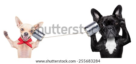 couple of dogs talking on the can phone, isolated on white background - stock photo