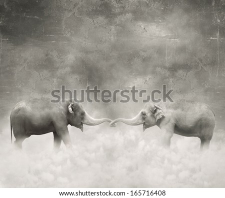 Couple of elephants who keeps with their trunks like a lovers in black and white and a surreal background - stock photo