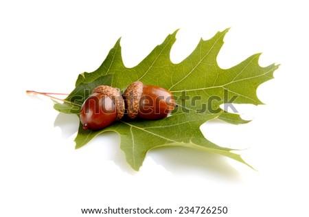 Couple of glands,acorns on leaf isolated on white background - stock photo