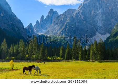 Couple of horses grazing on green pasture in mountain valley of Fischleintal, South Tyrol, Dolomites Mountains, Italy - stock photo