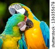couple of macaw parrots in nature - stock photo