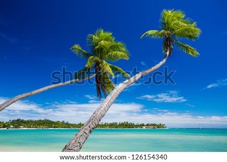 Couple of palm trees hanging over stunning green lagoon - stock photo