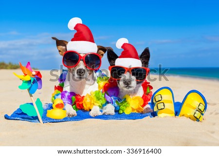 couple of two dog sitting close together wearing santa claus hat at  beach on summer christmas vacation holidays, on a honeymoon retreat - stock photo
