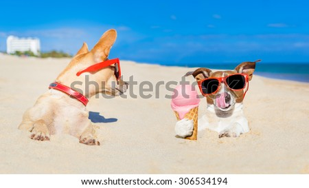 couple of two dogs , one  licking ice cream with tongue buried in sand  at the ocean beach in summer vacation holidays,other dog jealous about it - stock photo