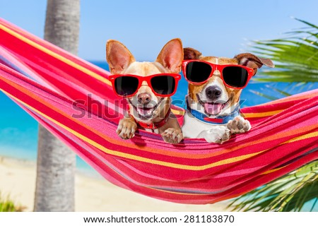 couple of two  dogs relaxing on a fancy red  hammock with sunglasses in summer vacation holidays at the beach under the palm tree