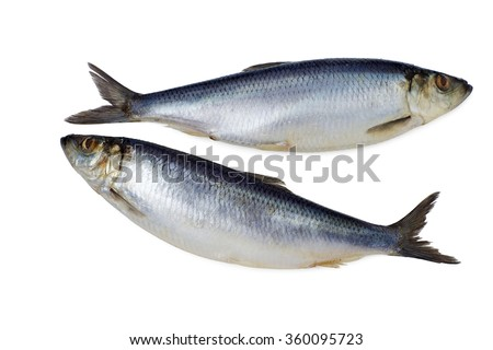 couple of whole herring on a white background isolated