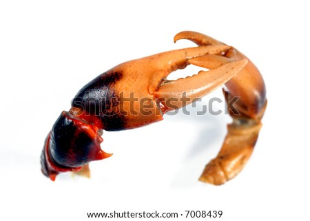 couple pincer of crab on the white background