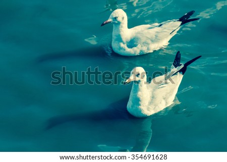 Couple Seagull on seawater, Beauty from the Nature life
