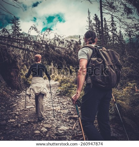 Couple with hiking poles walking in a forest  - stock photo