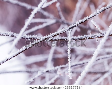 Covered by snow dry plants. - stock photo