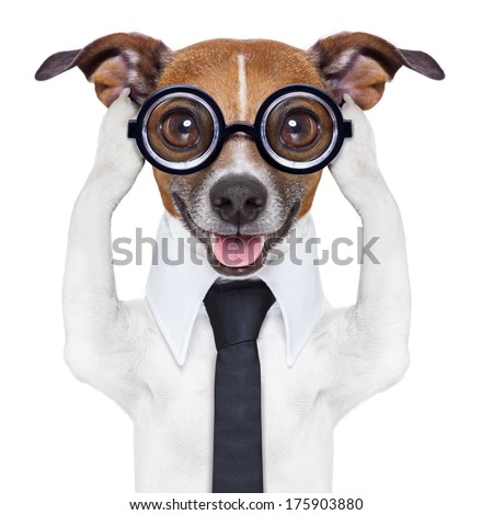 covering both ears dog with paws and a blue tie - stock photo