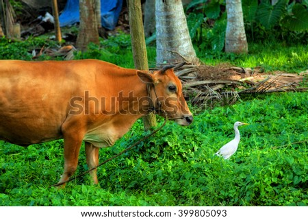 Cow and heron on a green meadow