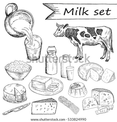 Cow and milk set. Hand drawn vintage illustration. Natural dairy products background. Line art style.