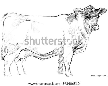 Cow. Cow sketch. Dairy cow pencil sketch. Animal farm. Black Angus Cow - stock photo