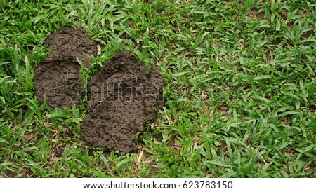 Cow Poop Stock Images, Royalty-Free Images & Vectors ...