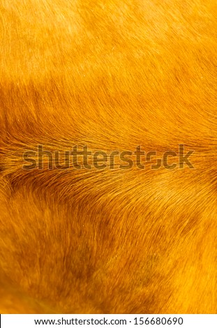 cow fur - stock photo
