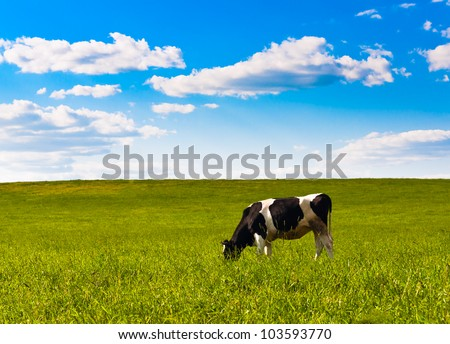cow grazes on green meadow - stock photo
