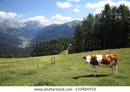 cow grazing in mountain pastures - stock photo