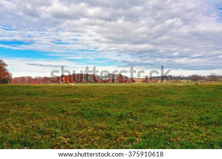 Cow grazing in the autumn field