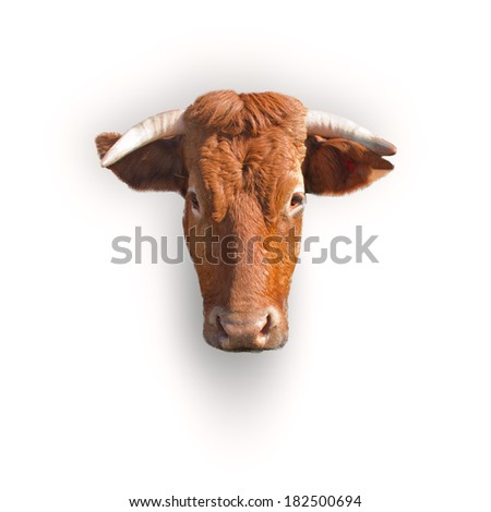 cow head - stock photo