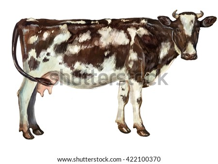 cow illustration - stock photo