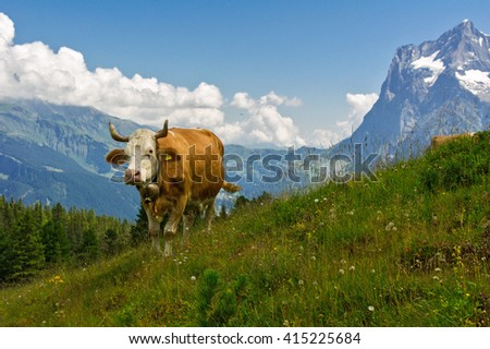 Cow in idyllic alpine landscape, Alps mountains  and countryside in summer, Switzerland  - stock photo
