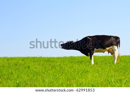 cow in the meadow - stock photo