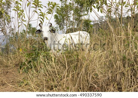 Cow in the middle of the bush